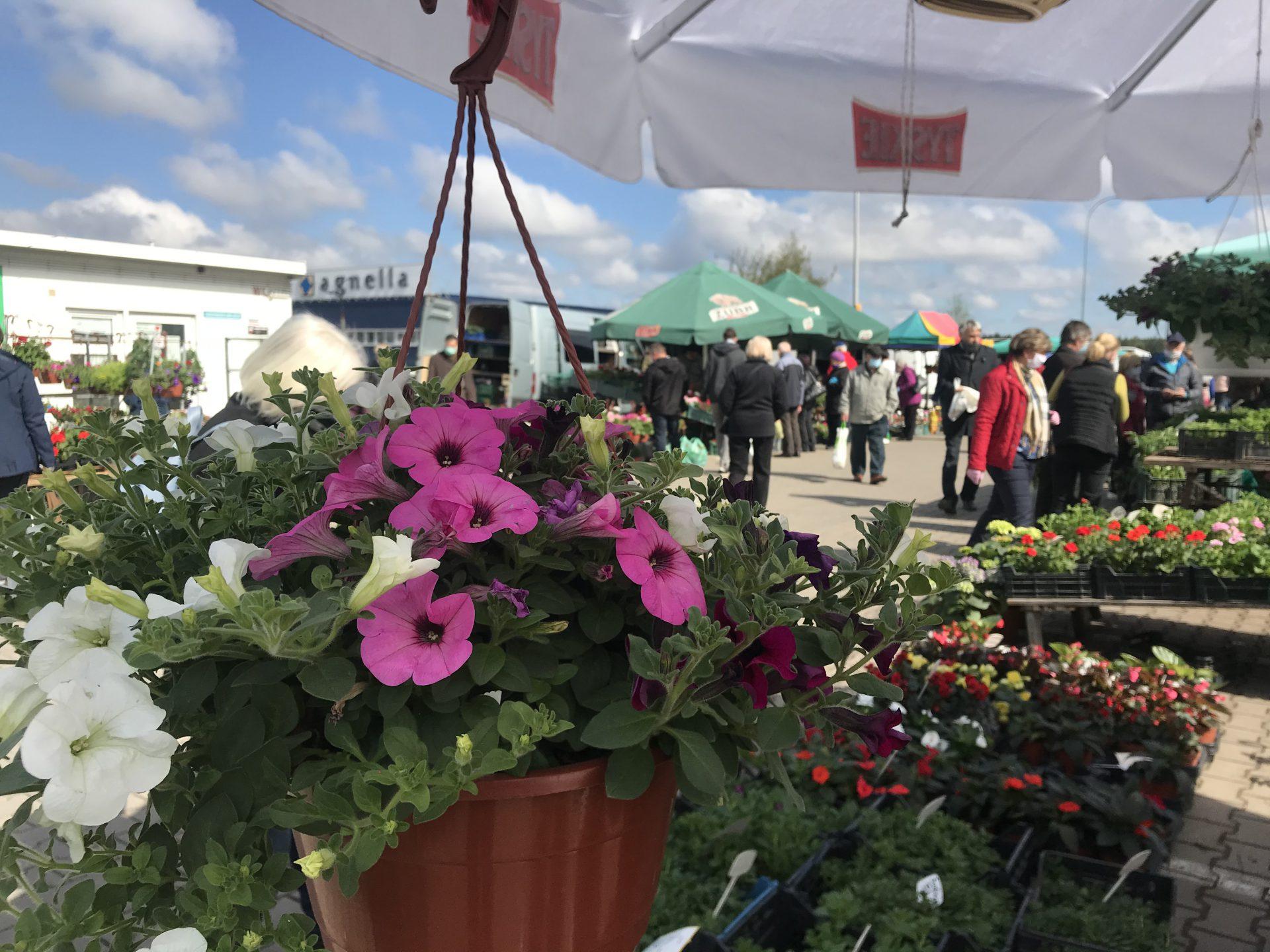 Kwiaty Balkonowe Podlaskie24